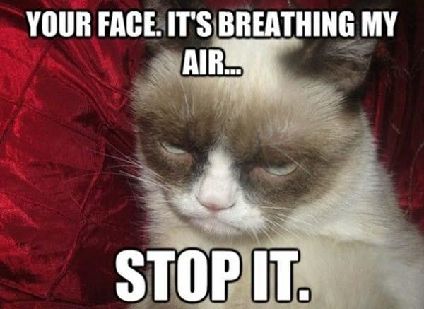 your face is breathing my air stop-it Grumpy-cat meme