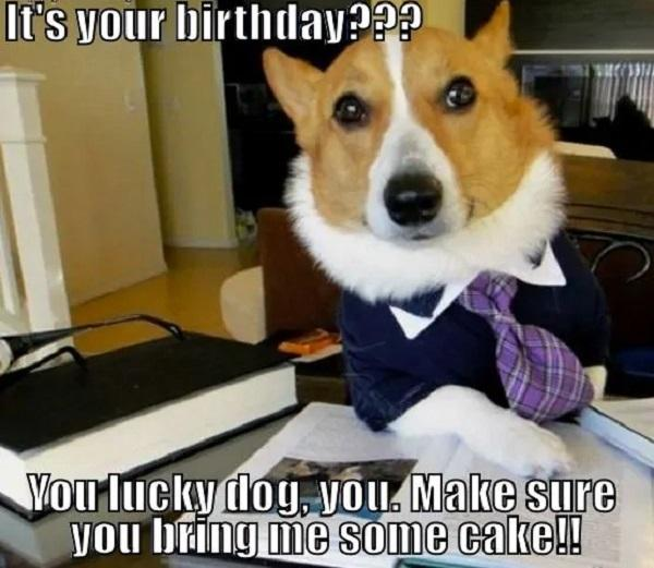 Happy-Birthday-Dog-Meme-Its-your-birthday-you-lucky-dog-you-make-sure-you-bring-me-some-cake