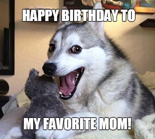 Happy-Birthday-Dog-Meme-Mom
