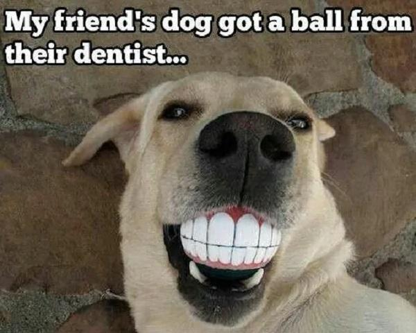 Smiling-Dog-Meme-My-friends-dog-got-a-ball-from-their-dentist