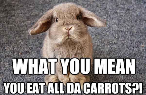 What-You-Mean-Funny-Rabbit-Meme