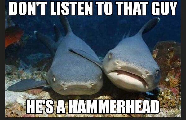 animal meme don't listen to that guy he's a hammerhead
