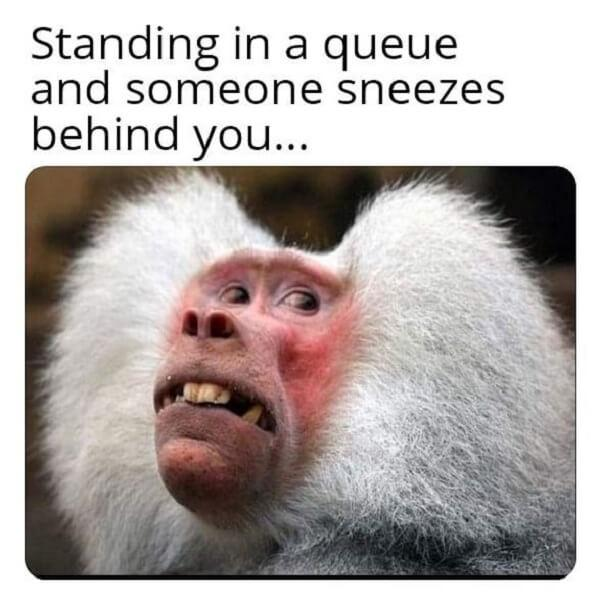 animal meme standing in a queue and someone sneeze behind you