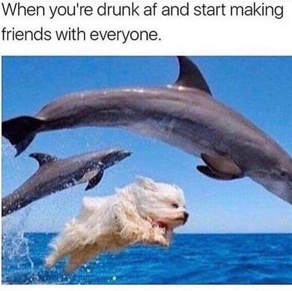 animal meme when you are drund af