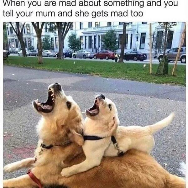 animal meme when you are mad about something