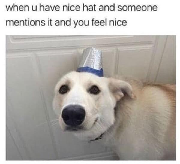 animal meme when you have a nice hat and someone mentions and feel you nice