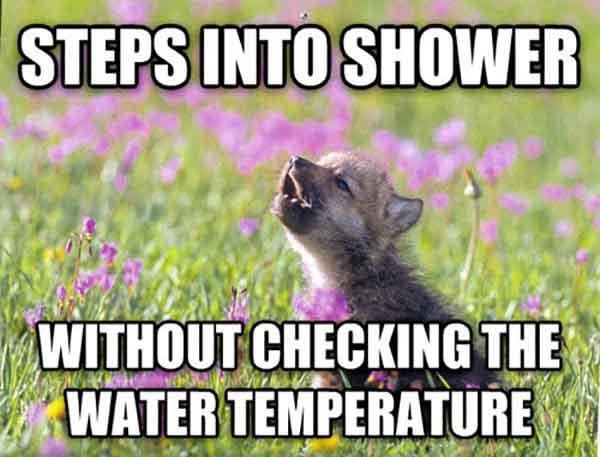 baby animal memes step into showers