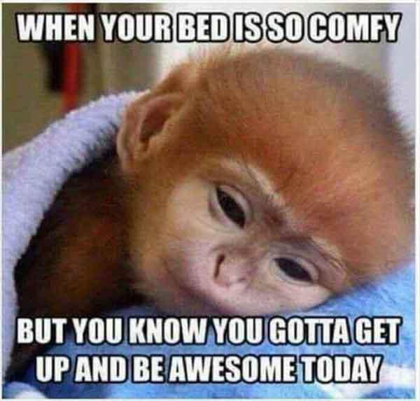baby animal memes when your bed is so comfy