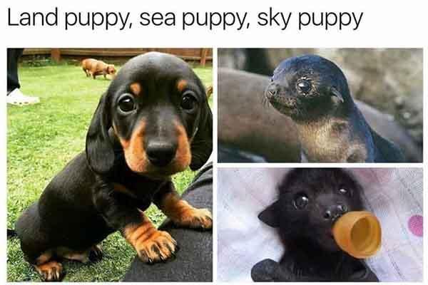 baby animal memes