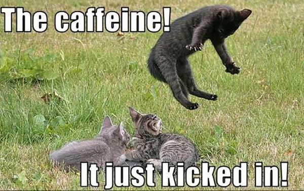 caffeine meme the caffeine just kicked in
