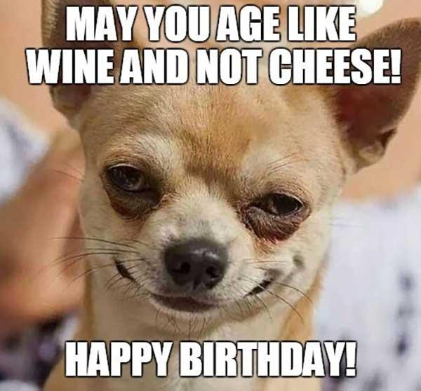 chihuahua_happy_birthday_wine_meme1