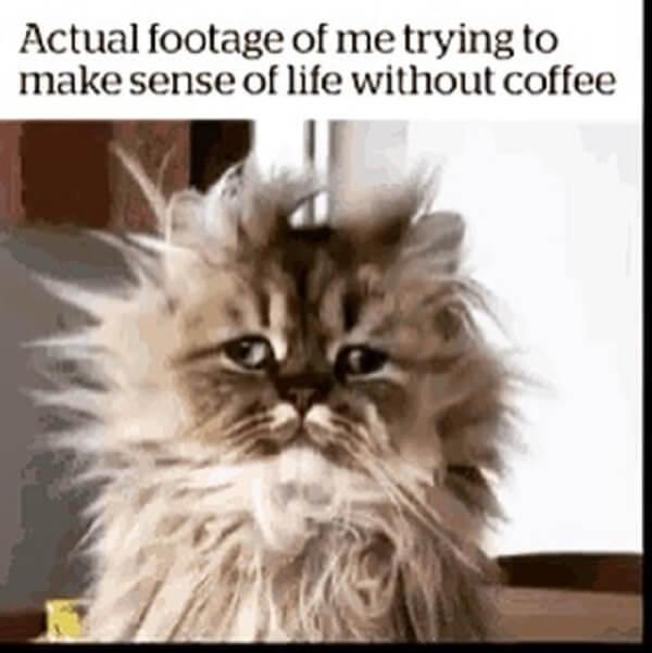 coffee meme actual footage of me