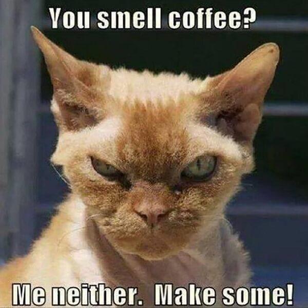 coffee meme you smell coffee