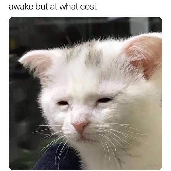crying cat meme awake but at what cost