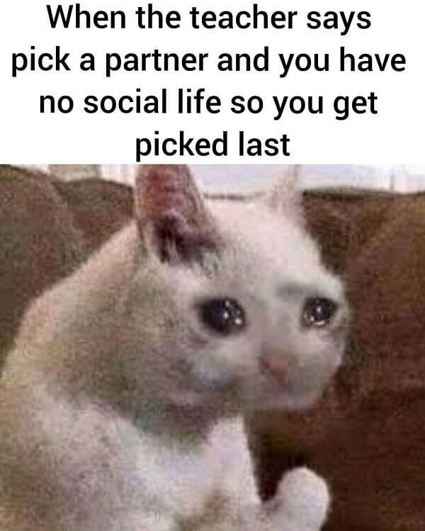 crying cat meme no social life