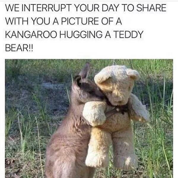 cute animal memes we interrupt your day to share with you...