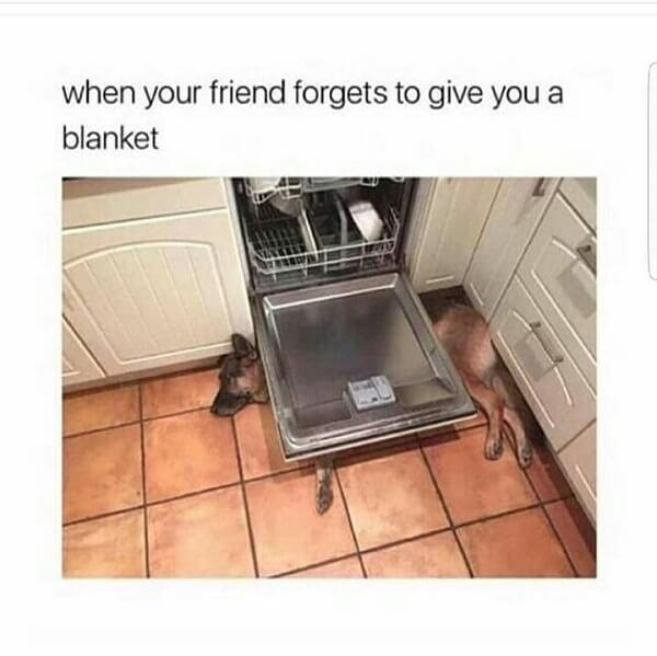cute animal memes when your friend forget to give you a blanket