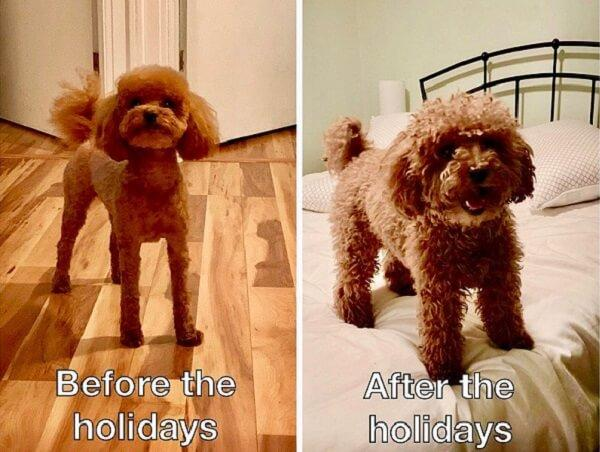 cute dog meme before holidays