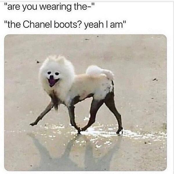 dog meme boots