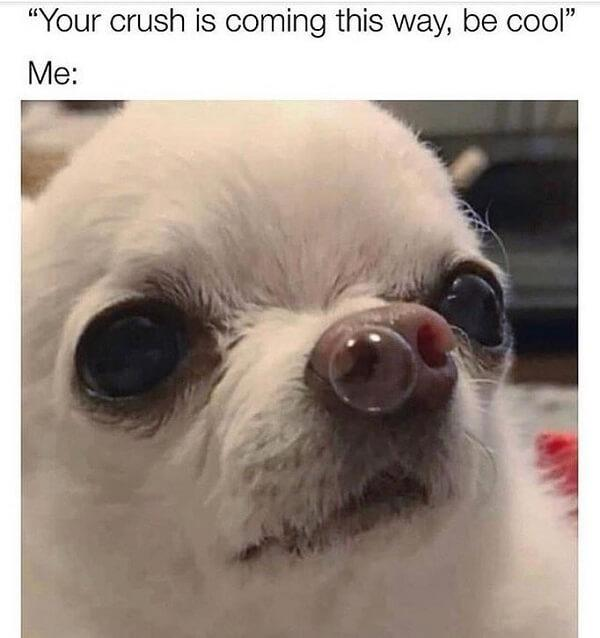 dog meme crush
