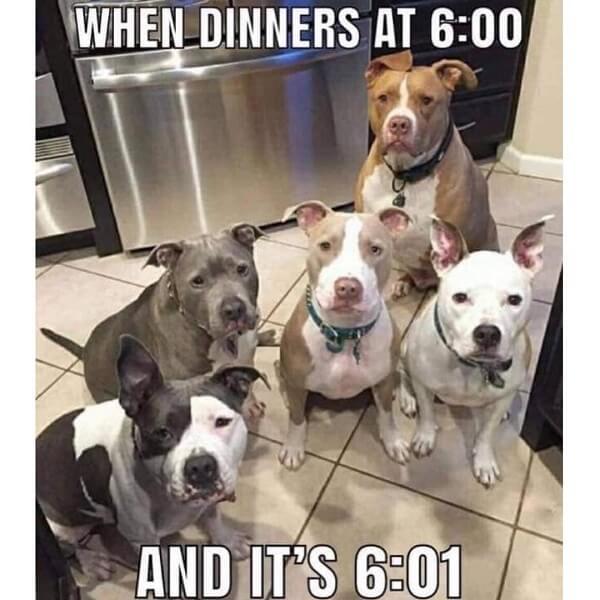 dog meme dinners