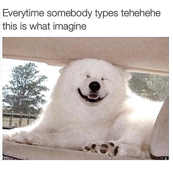 dog meme everytime somebody types