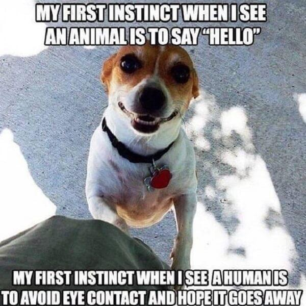 dog meme first instinct