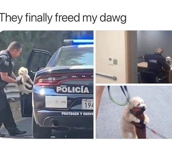 dog meme free dog