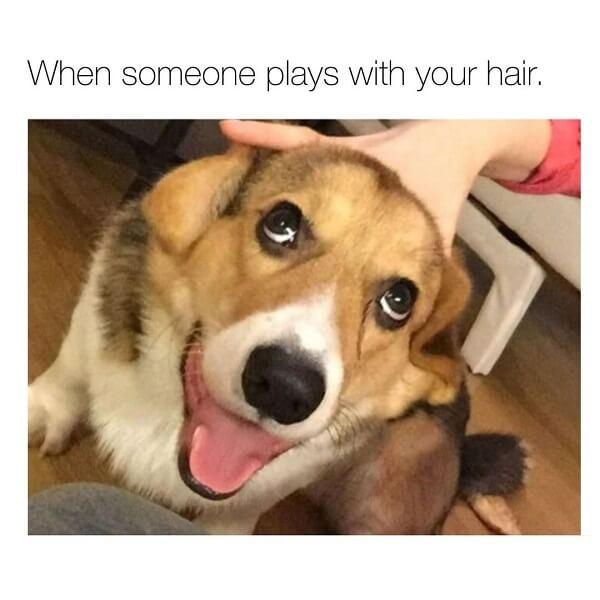 dog meme hair