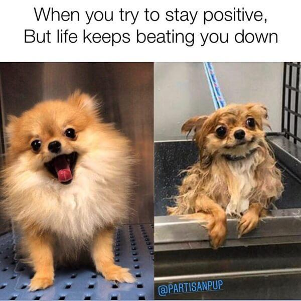dog meme life keeps beating you down