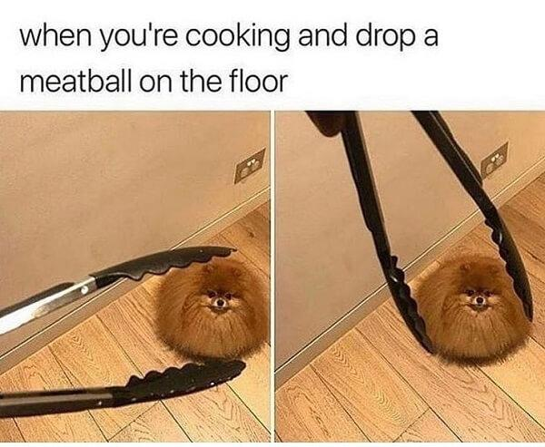 dog meme meatball