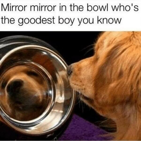 dog meme mirror mirror