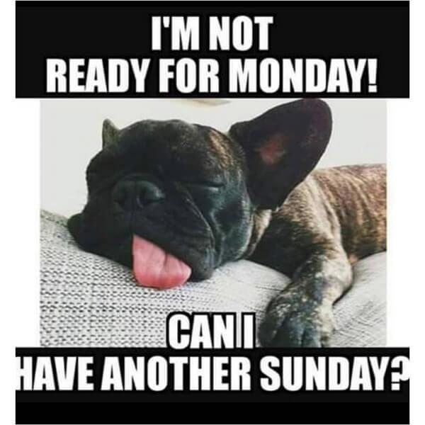 dog meme not ready for monday