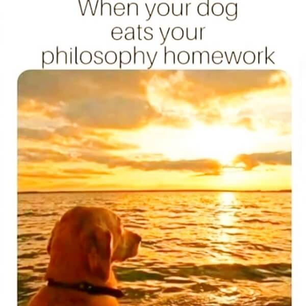 dog meme philosophy homework