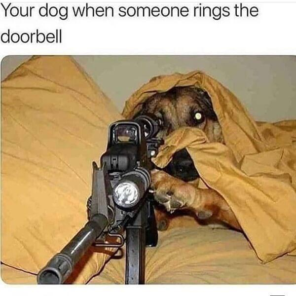 dog meme rings at the door