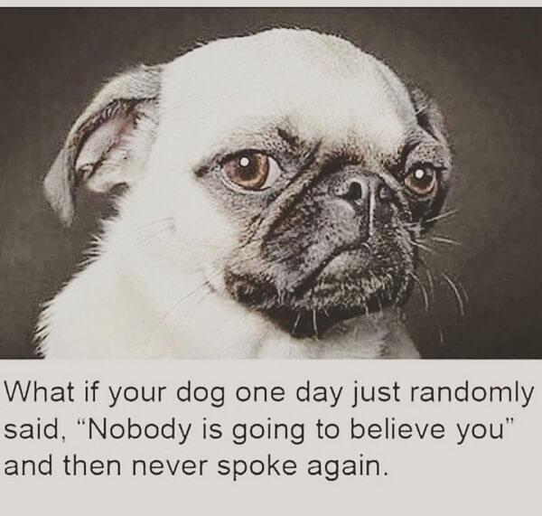 dog meme speak