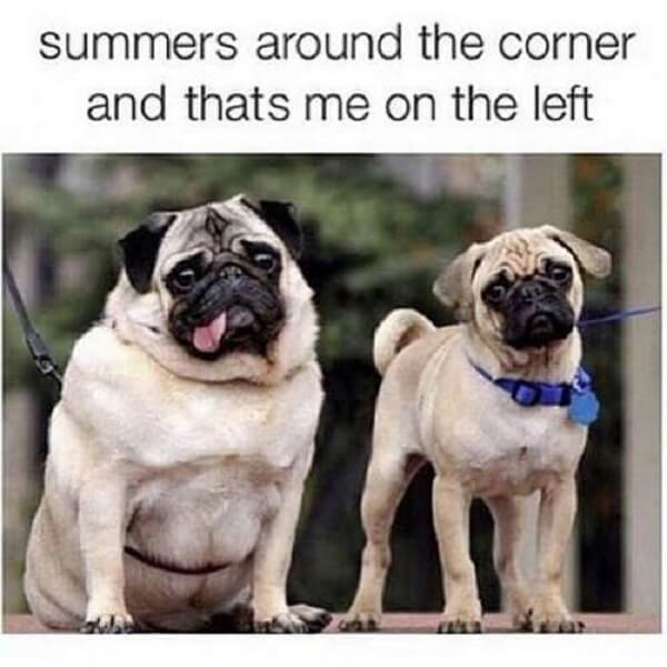 dog meme summers around the corner