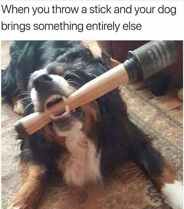 dog meme throw a stick
