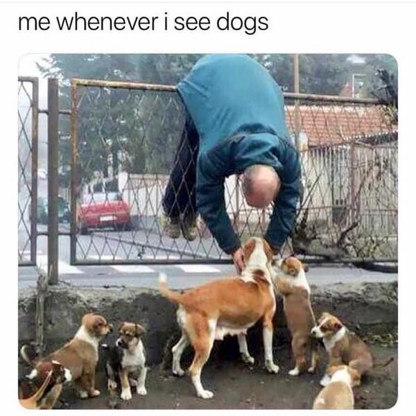 dog meme whenever i see dog