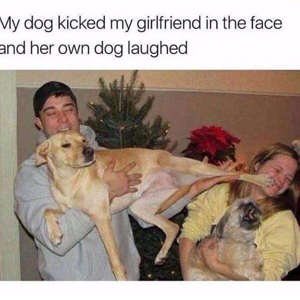 funny animal meme dog meme kick girlfriend
