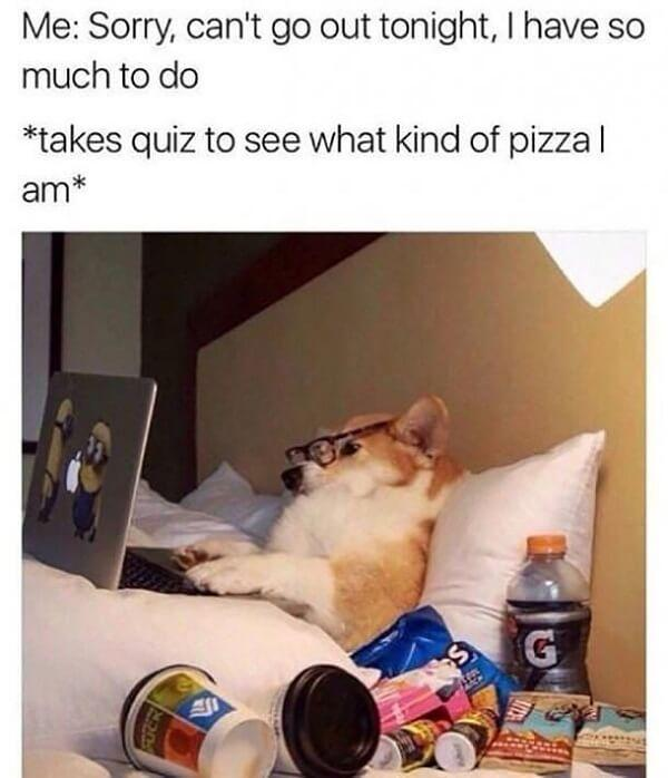 funny animal meme sorry can't go out tonight i have so much to do...