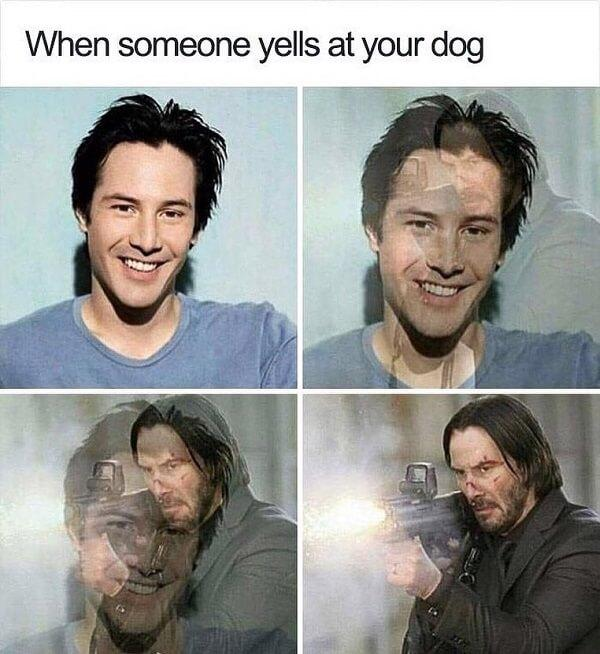 funny laughing memes when someone yell at your dog