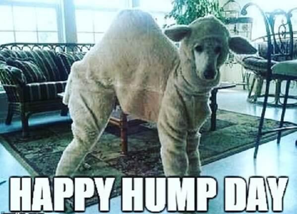 happy hump day memes