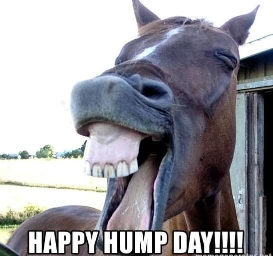 happy-hump-day