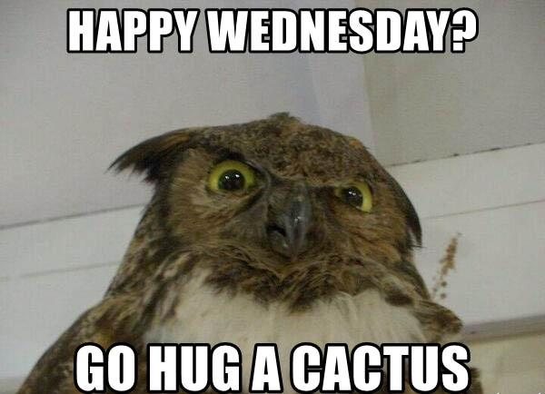 happy-wednesday-go-hug-a-cactus