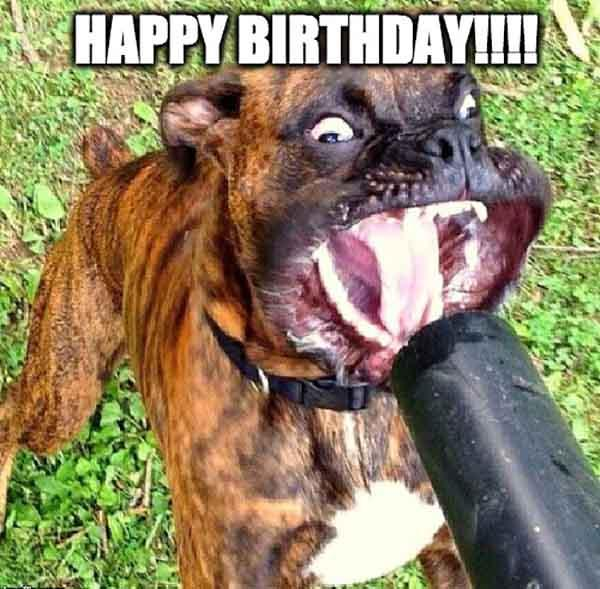 hilarious happy birthday dog meme