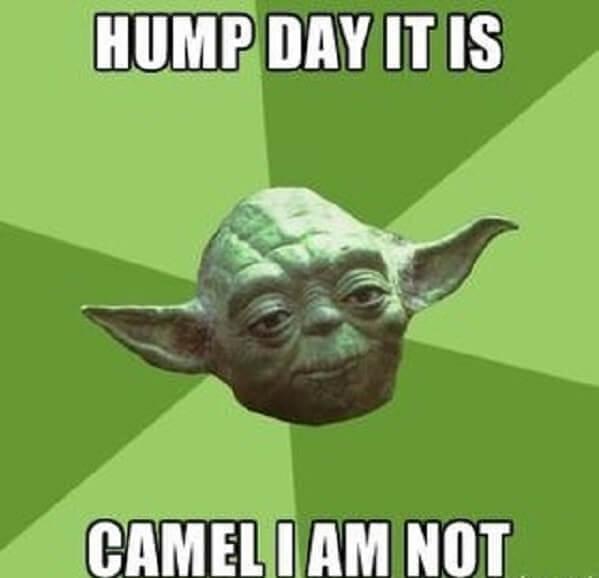 hump day camel meme camel i am not