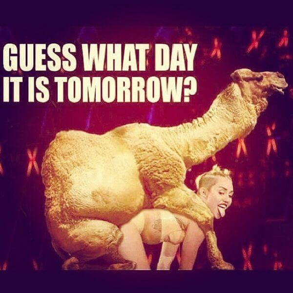 hump day camel meme guess what day tomorrow