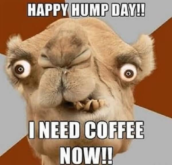 hump day camel meme i need coffee now