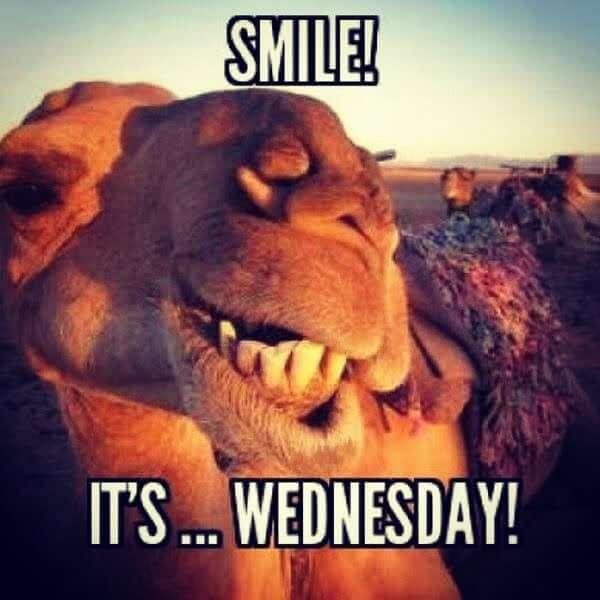 hump day camel meme it'S wednesday